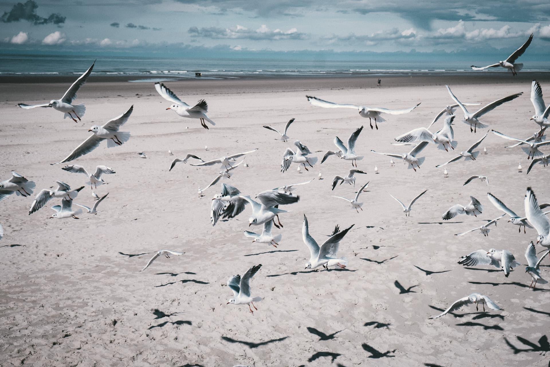 Mouettes à Boulogne Sur Mer