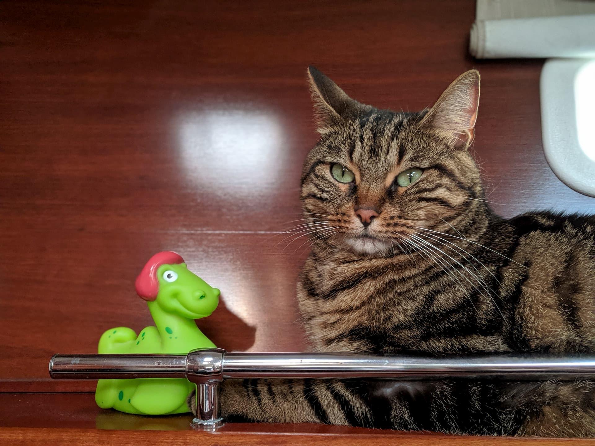 Monsieur Chat et Nessie