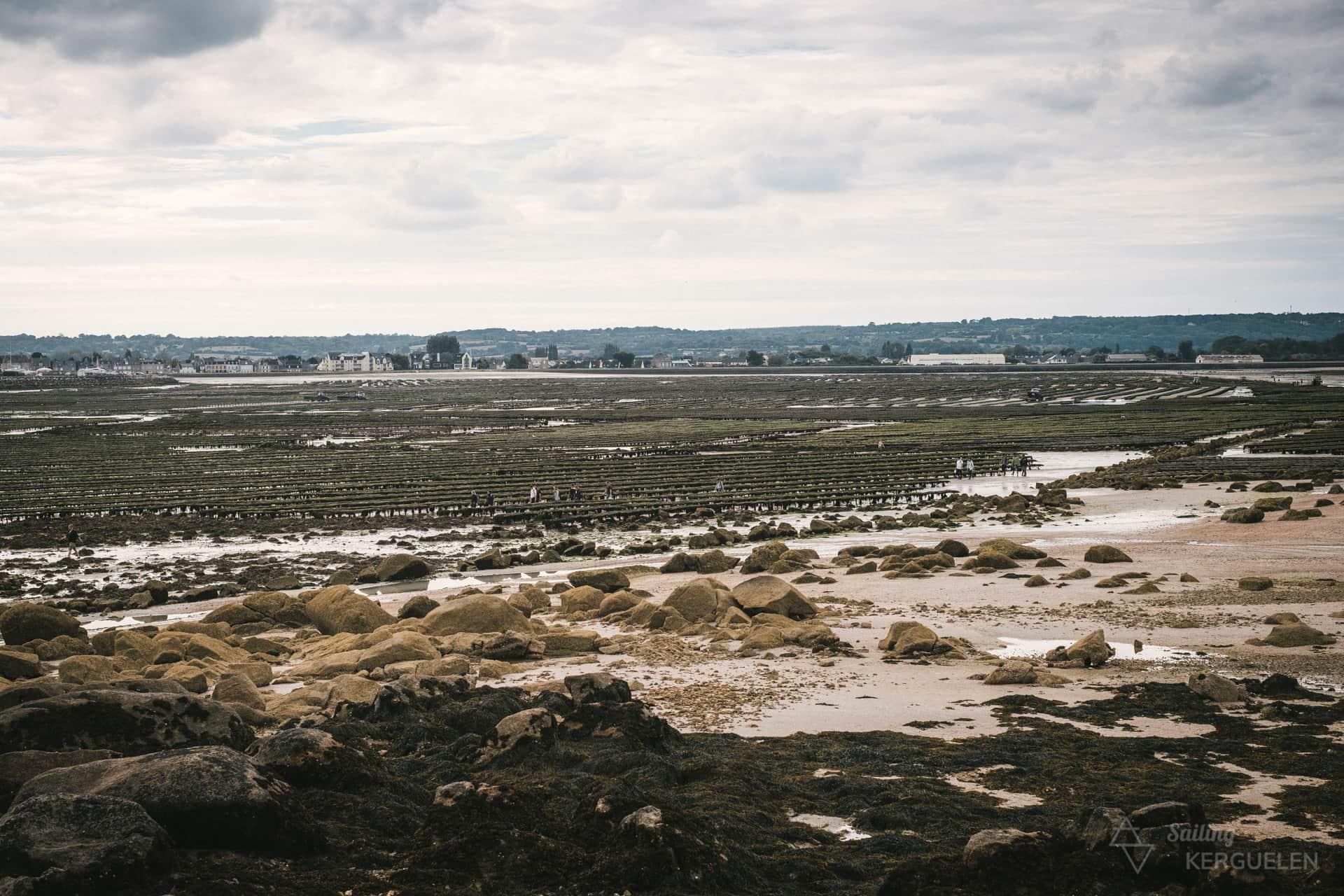 Les parcs ostréicoles à Saint-Vaast-la-Hougue